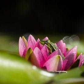 Groene kikker in bloem van een waterlelie van Theo Klos