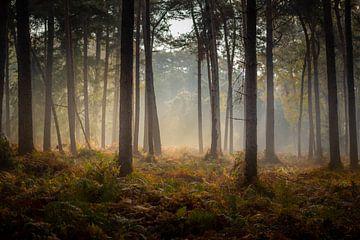 Mastbos op een herfstmorgen van Rob Bout