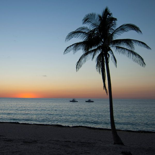 Sunset under the palms