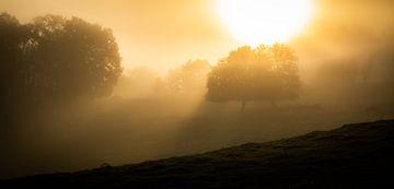 Herbstsonne von Frans Scherpenisse