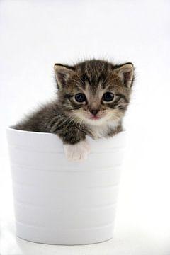 Kattenbak van Tesstbeeld Fotografie