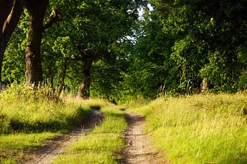 Waldweg auf Usedom van Ingo Rasch