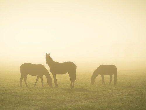 Paarden in de mist van Roelof Nijholt