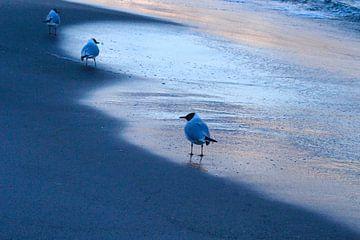 Ostsee von Anette Jäger