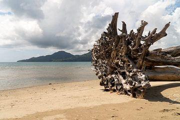 Baum am Strand, Ambon, Molukken, Indonesien von Zero Ten Studio