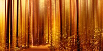 Herbstwald van Violetta Honkisz