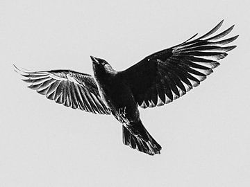 Vliegende kauw van Brigitte Jansen