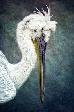 Pelikan von Claudia Moeckel