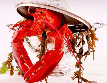 kreeft - Lobster van Christine Vesters Fotografie
