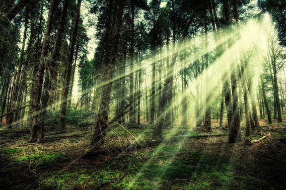 Walk into the Light... van Frits Vrielink
