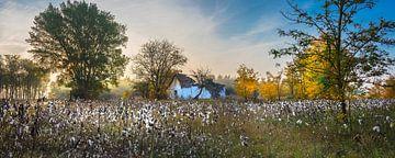 Zonsopkomst boven katoenbollen in de herfst, Hongarije van