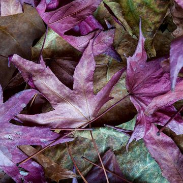 paarse herfst van Pixel Meeting Point