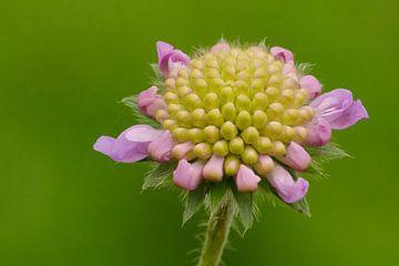 Couronne en fleur. sur Petra Vastenburg