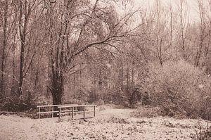 Winterdag in het bos