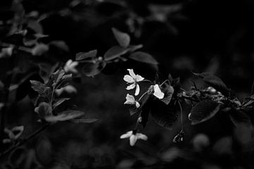 Blüte von Iritxu Photography