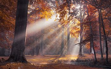 Zonnestralen door de herfst bomen van Rob Visser