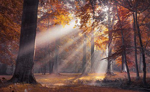 Zonnestralen door de herfst bomen