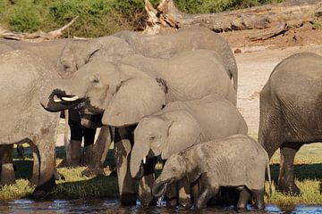 Familie olifant van Erna Haarsma-Hoogterp