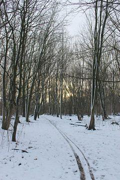 Winterwunderland 2 von Carin Klabbers