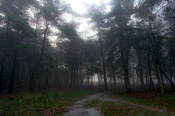Het bos van Matthijs Dijk