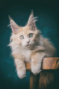Das Kätzchen mit seinem durchdringenden Blick posiert auf einem Holzhocker. von mirka koot
