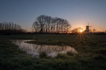 Broyer le papillon au lever du soleil sur Moetwil en van Dijk - Fotografie