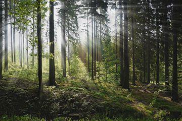 Mixed forest in the summer van Gunter Kirsch