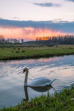 Zwaan in het Cronesteyn Park von Richard Steenvoorden