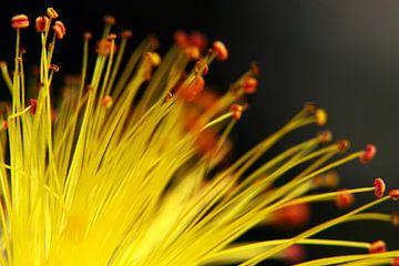 Pollen Drähte  von Jolanta Mayerberg