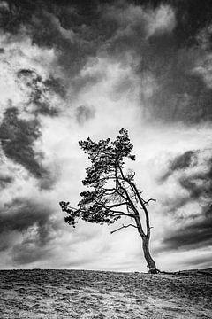 Lonely tree van Freddy Hoevers