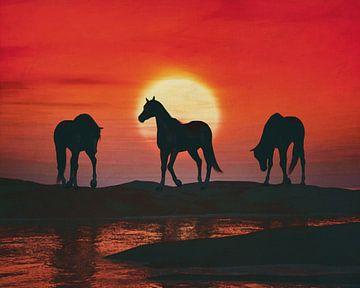 Chevaux au coucher de soleil rouge