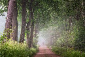 Aan de rand van de Laurabossen op mistige bosweg van Peschen Photography
