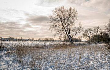 Nederlands landschap in de winter van Ruud Morijn