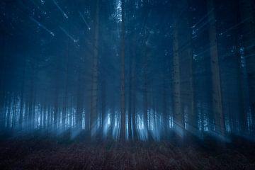Lichtval door de bomen van Mark van der Walle