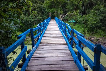 Wood bridge in jungle von Arkadiusz Kurnicki