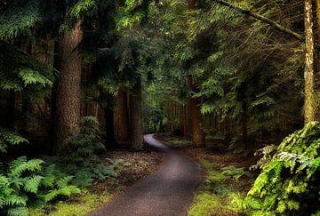 Pad door het bos sur Rigo Meens