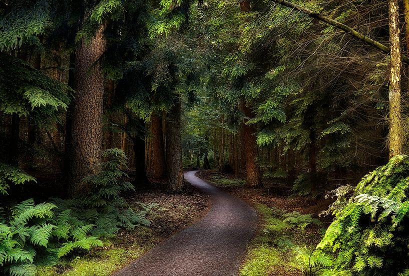 Pad door het bos van Rigo Meens