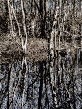 Mysterieuze samenscholing in het bos van Lynxs Photography