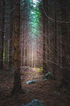 Mysteriöser Fichtenwald von Patrik Lovrin