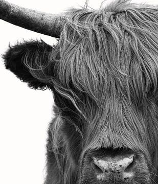 Schotse Hooglander portret in zwart-wit van Marjolein van Middelkoop