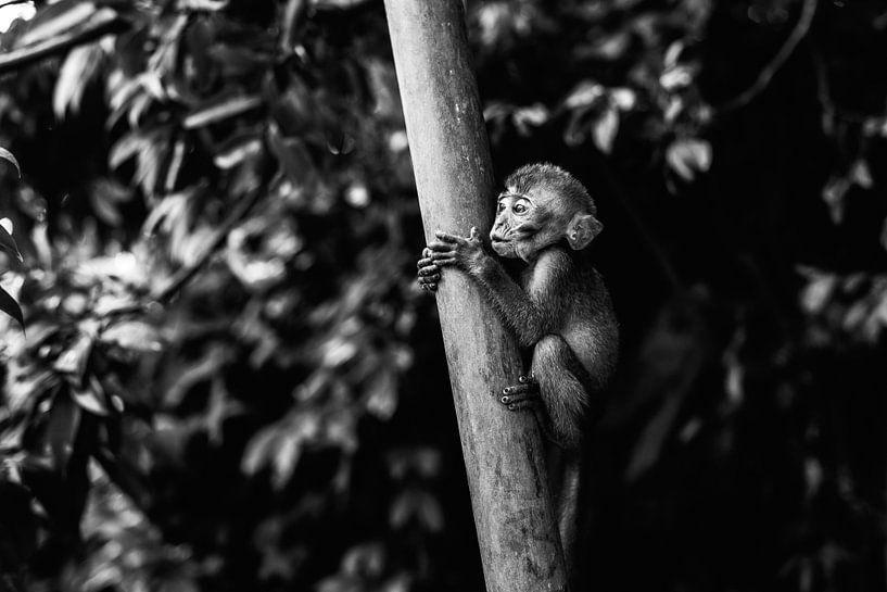 Monkey Business II van Jesse Kraal