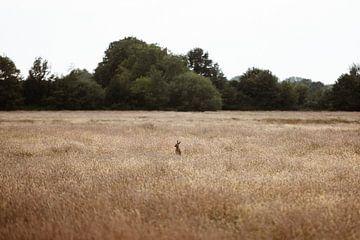 Zomer op het Veluwse platteland van Nanda van der Eijk