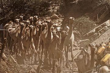 kamelen van rene schuiling