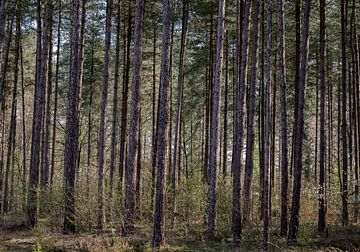 Der Wald von Pieter van der Zweep