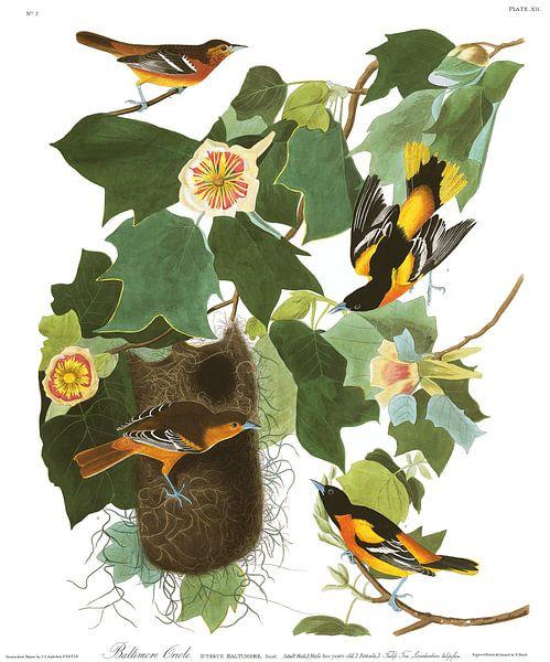 Baltimoretroepiaal van Birds of America