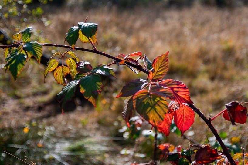 Rood herfstblad van Ingrid Aanen