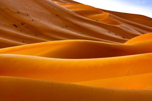 Lijnen in de woestijn