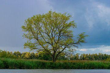 Boom in de Biesbosch van Merijn Loch