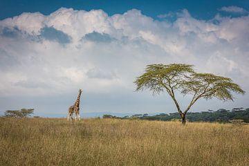 Oost-Afrika, Jeffrey C. Sink van 1x