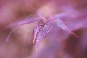 Abstracte herfstkleuren